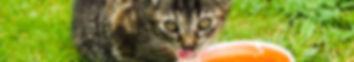 Gamelles pour chat, northmate, gamelles déco, écuelles, distributeurs, double gamelles