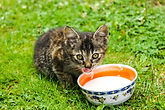 biofood, friandises pour chat, boîtes et nourriture humide, stick au thon,