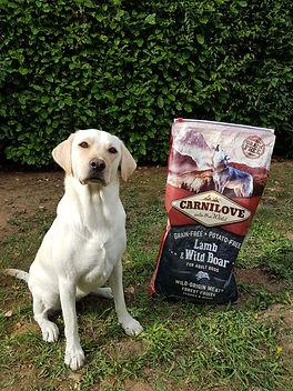 Croquettes Carnilove sans céréales pour chiens avec peu de glucides