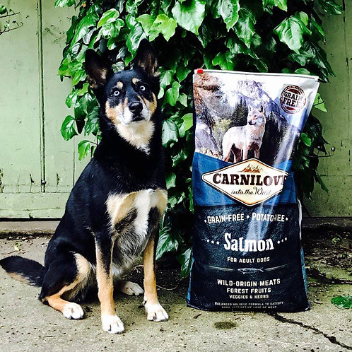 CARNILOVE Saumon pour chiens adultes