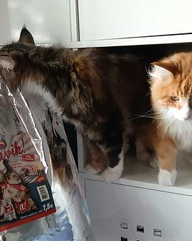 Croquettes sans céréales Atavik pour chat