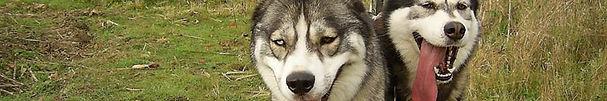 boîte de qualité pour chien, friandises, bio, sans colorant, os à mâcher, répulsifs, alpha spirit, poissons séchés, almo nature, Petit, récompenses pour chien, huile de saumon, biscuits pour chien