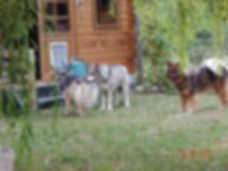 Pension canine familiale 78, garde d chiens, petsitter