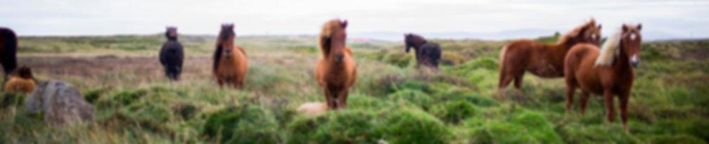 Compléments alimentaires chevaux, poneyx, équitation, friandises, cookies, huiles oméga 3, huile à l'ail répulsif chevaux, cookies carottes, bonbons effol