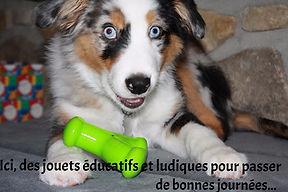 Pension education positive, balade pour chiens, yvelines, giverny, pension familiale, écologique