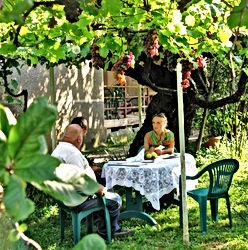Meeting Potential Hosts in Kakheti Georgia 300 year old Grape Viine