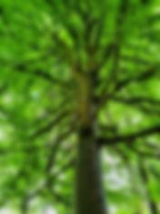 Forest 4.jpg