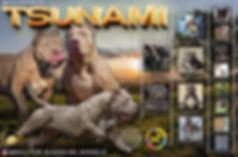 TSUNAMI PED BANNER.jpg