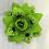 Thumbnail: Hocus Pocus Rose