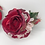 Thumbnail: Man Eater roses