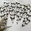 Thumbnail: Zebras! 🦓
