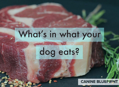 Do you know what's in your dogs food?