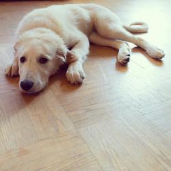 Daisy _ Canine Companion Dog Care ._._