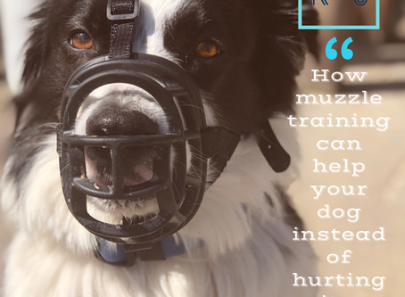 Why your dog needs to be comfortable with a muzzle ...