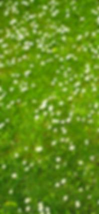 Jardinería Vigo, Jardineros Vigo, Mantenimiento jardín Vigo, Riego Automático jardín Vigo, Empresa jardineros Vigo, Jardín Vigo, Obra jardín Vigo, Poda Jardín Vigo, Diseño Jardín Vigo, Rocalla jardín Vigo, Cangas, Mos, Moaña, Nigrán, Baiona, Bueu, Gondomar