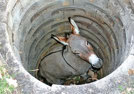 The Donkey in the Well