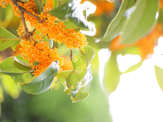 秋の香り。