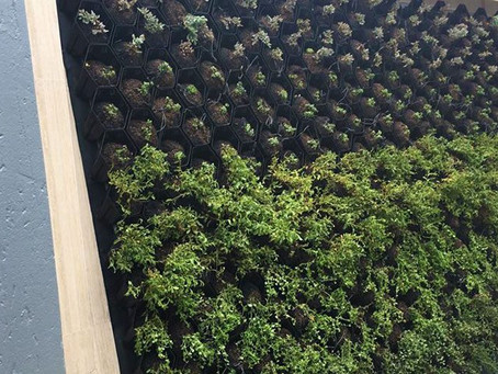 The Beauty of Living Walls!