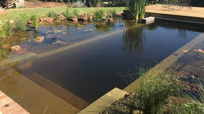 Bryanston Natural Pool Conversion