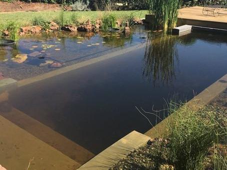 Bryanston Natural Pool Conversion