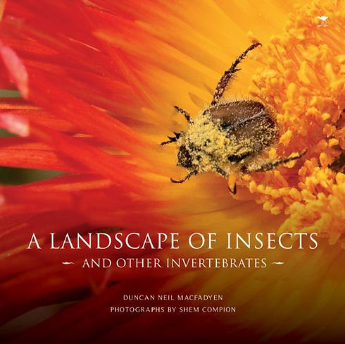 A landscape of insects.jpg