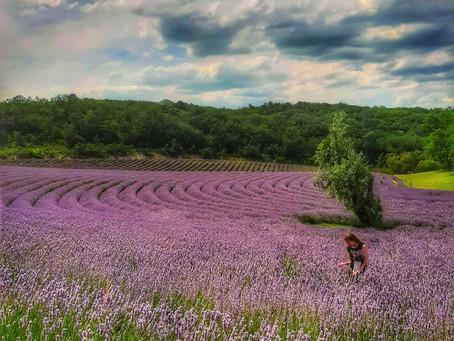 Let's talk about lavender! 🌿🌸