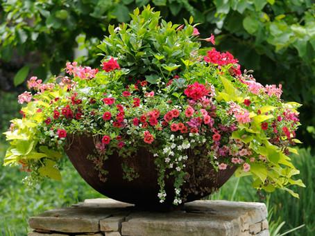 Pot gardening 🌱