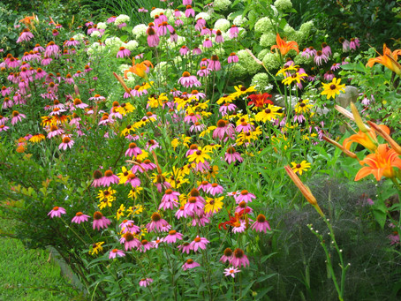 Make a butterfly garden - here is why! 🦋