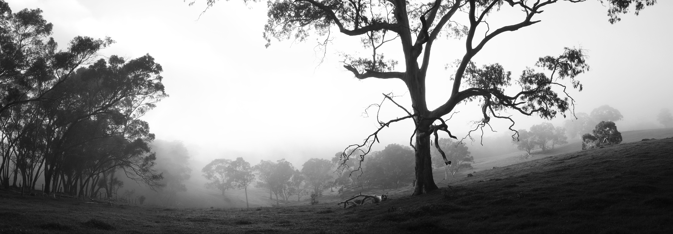 TASHA MUNRO Once upon a time in a foggy valley