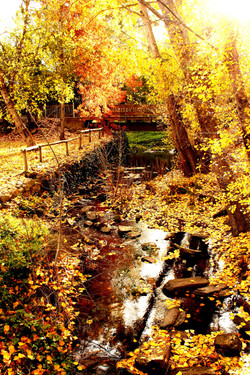 Bill Bebbington Autumnal Gold