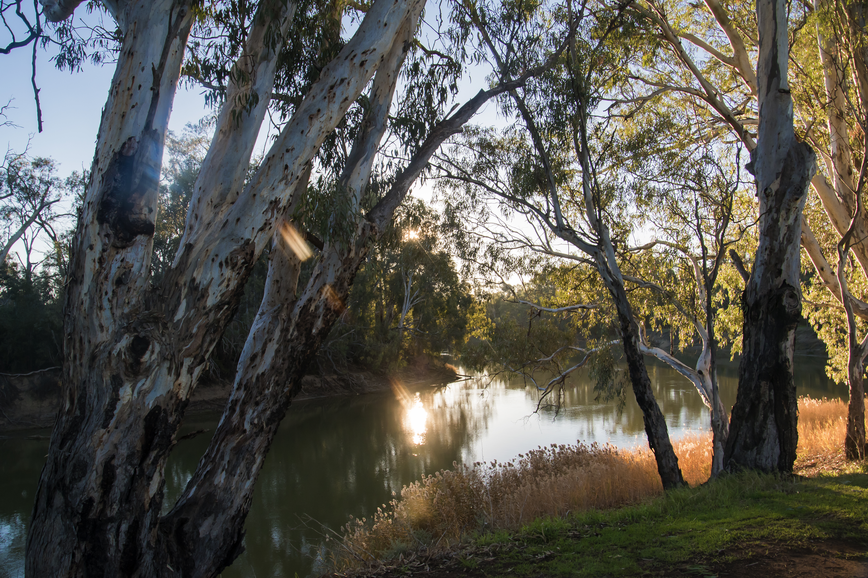 Landscape_Toolybuc_Lyndal Gibson_DSC_577