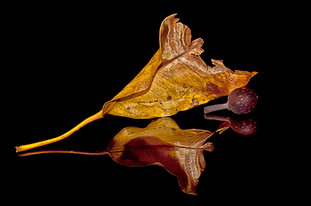 Fig Leaf Reflections