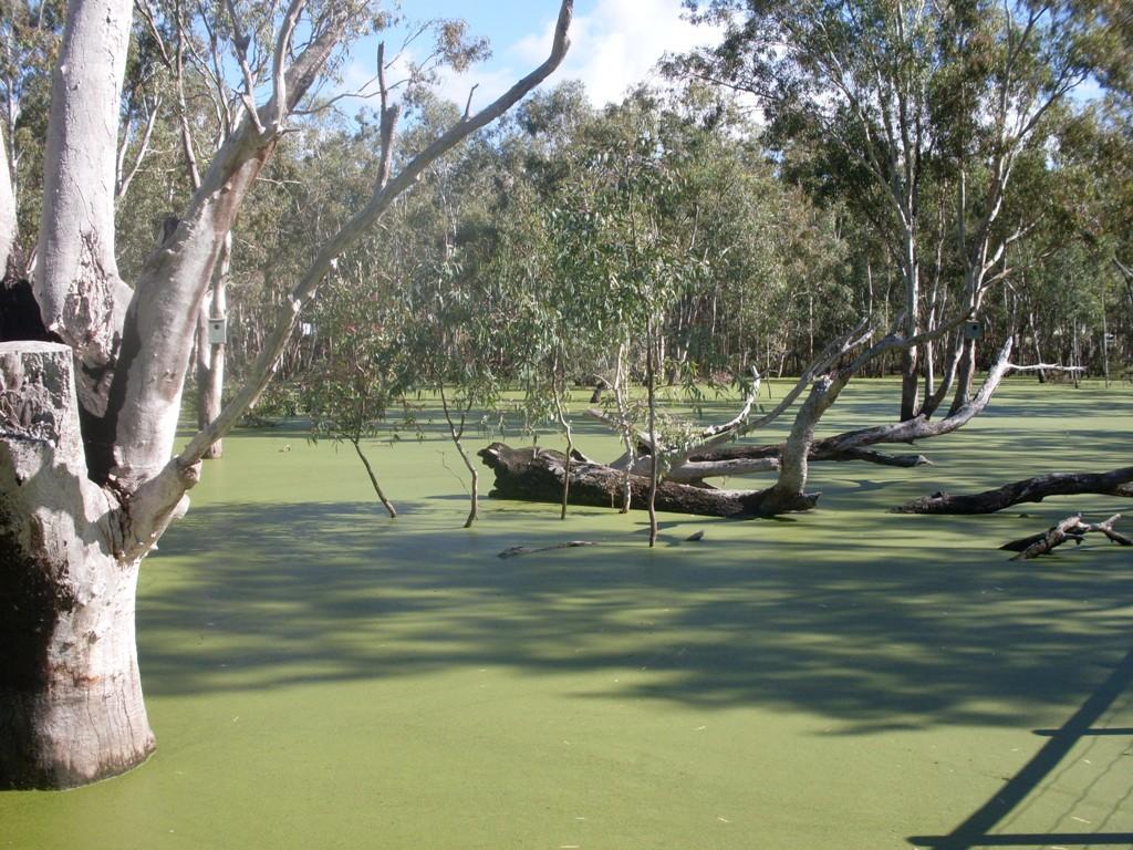 Nhill Wetlands