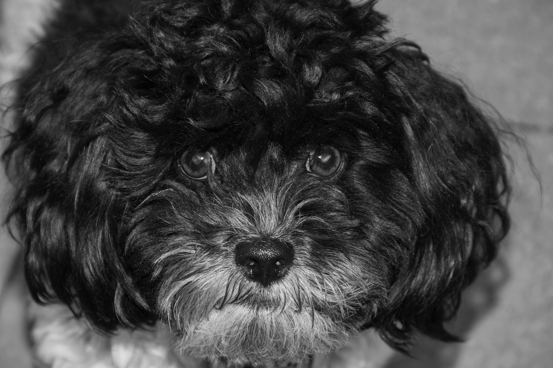 Scruffy Puppy_ Lyndal Gibson_DSC_0137 B&