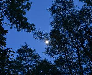 Wooland Moonlight
