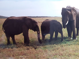 kenya elephants.jpg