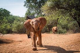 kenya elephant orphanage.jpg