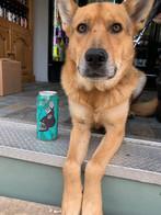 Cooper the Canine.jpg
