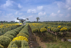 IMG_Drone in Farm.jpg