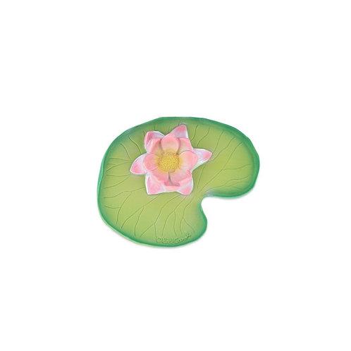 OLI & CAROL - Water Lily