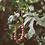 Thumbnail: MINTY WENDY - Terracotta