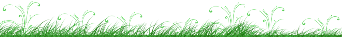 grass-3283193_960_720_edited.png