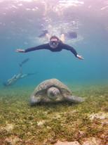 Snorkeling con tartarughe verdi!