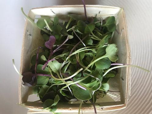 Micro Greens, 130g