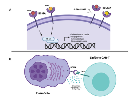 CAR-T anti-BCMA aprovado para tratamento do Mieloma Múltiplo