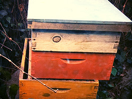 Bees and Gardening; making you sexier, body, mind and spirit