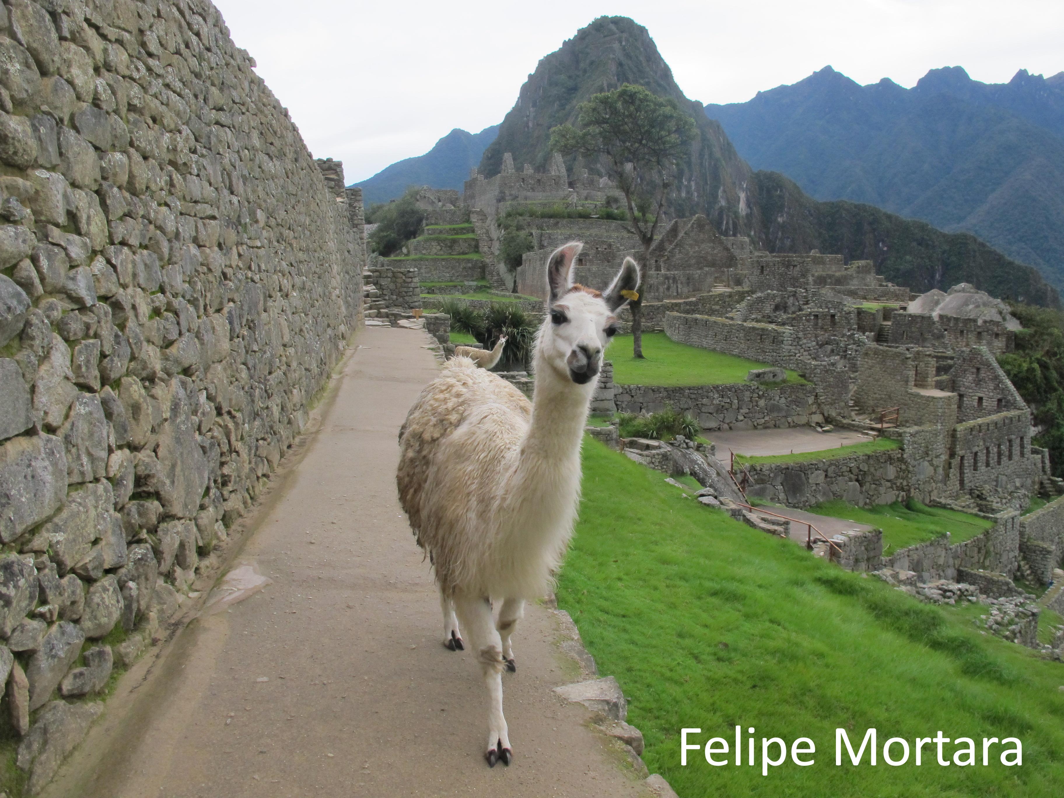 Machu Picchu. Cusco, Peru