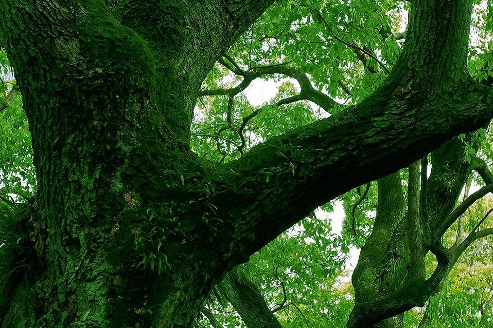 xtree_woods_00060_jpg_pagespeed_ic_TBBJEw8fNB.jpg