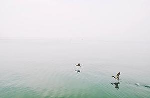 Zwei Enten fliegen über den See