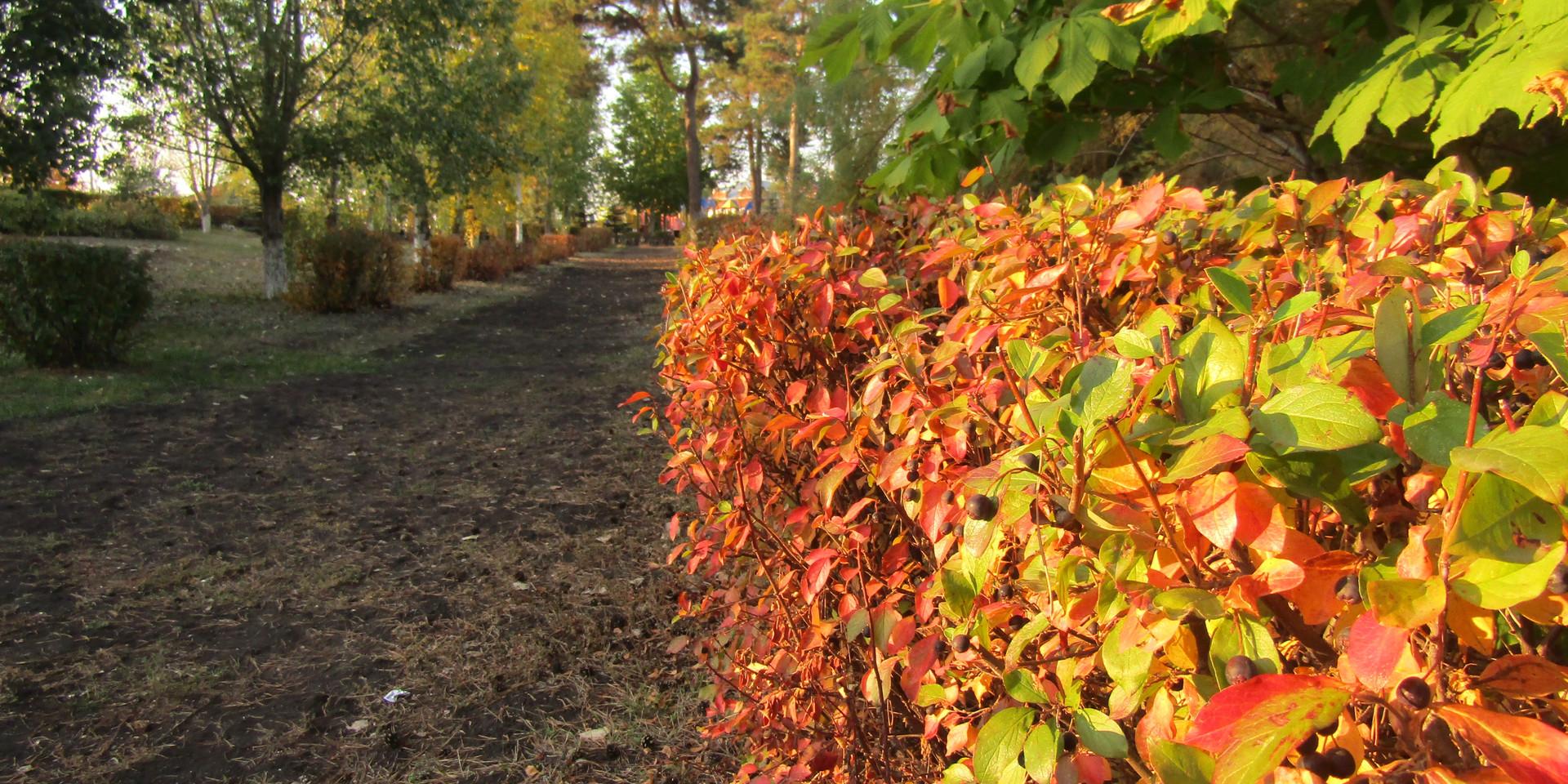 """""""Осенний парк"""""""